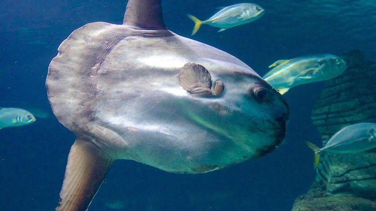 the-oceanografic-aquarium-57288